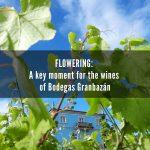 Flowering 2020: Bodegas Granbazán