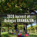 2020harvest at Bodegas Granbazán