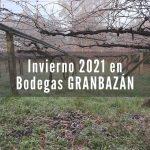 Estado del viñedo este invierno en Bodegas Granbazán